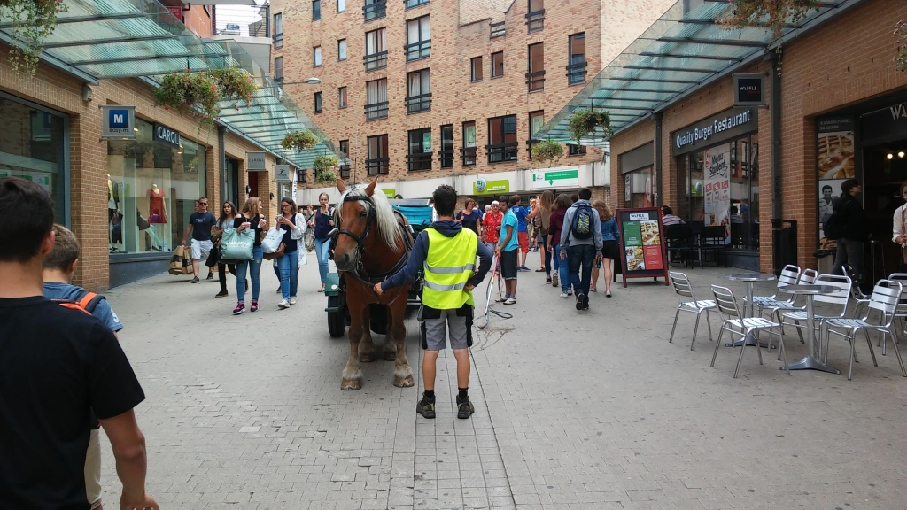Pour cette activité d'arrosage, La Cordiante Asbl a besoin d'un cheval imperturbable. C'est le cas de sa jument Comtoise (Crédit photo : L'équimag)