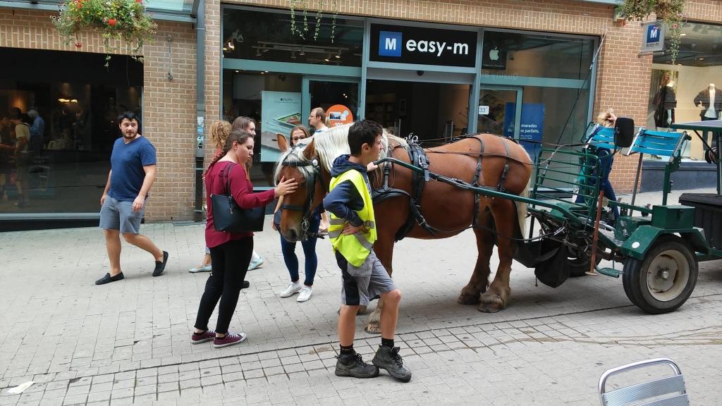 Le capital sympathie du cheval constitue un avantage non négligeable (Crédit photo : L'équimag)