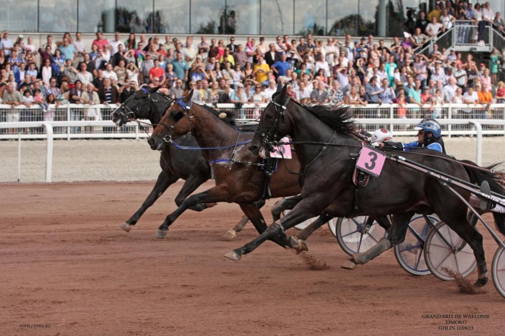 Hippodrome de Wallonie (Crédit photo : www.lamia.biz)