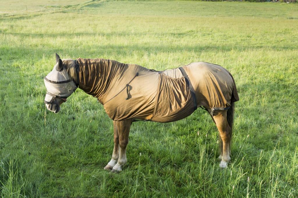 L'été n'est pas forcément agréable pour tous les chevaux, comme pour celui-ci qui semble fourbu et très sensible aux insectes. (Crédit photo: Adobe Stock/Gabort)