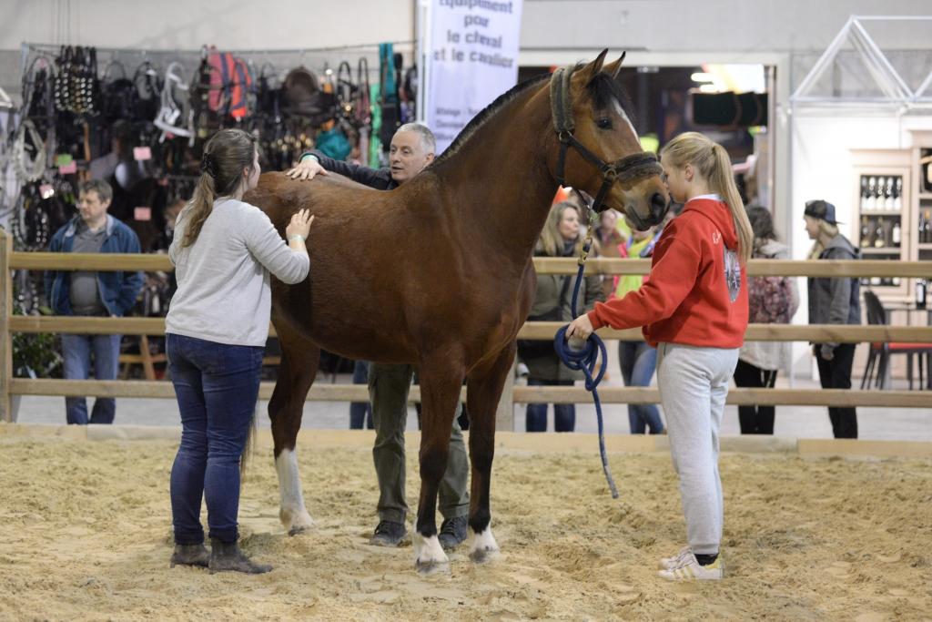 Une séance de shiatsu au Wallonie Equestre Event (Crédit photo : Photo Evénement)