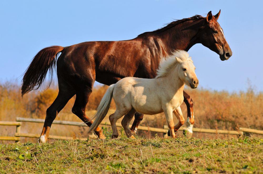Photo d'illustration (Crédit photo : Shutterstock)