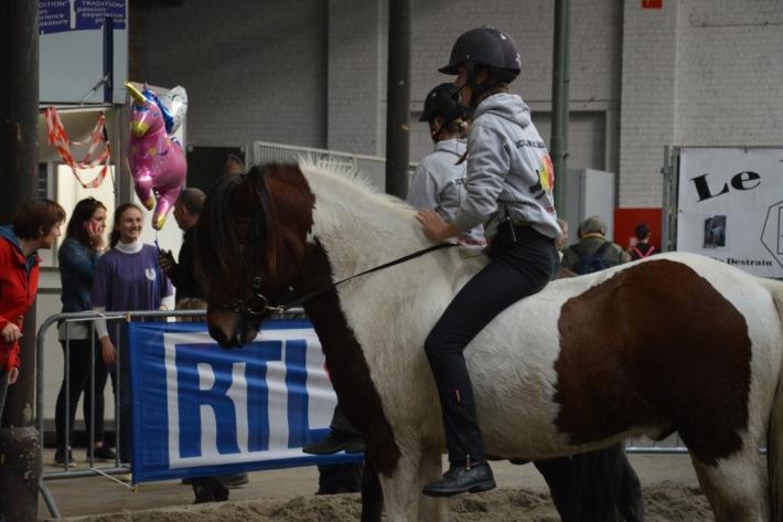 les islandais l 39 essai au salon du cheval de bruxelles