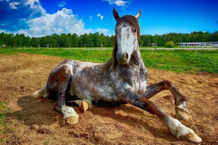 Un cheval ne se couchant pas la nuit manquera de sommeil réparateur. (Pixabay License)