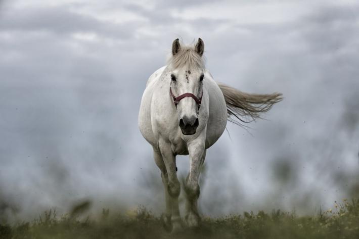 Les réactions des chevaux peuvent avoir de graves conséquences. (Crédit : Pixabay License)