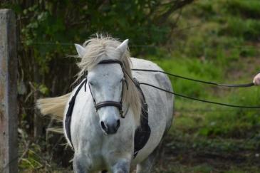 Certains chevaux ont plus de facilité à rester concentrés longtemps (Crédit : Gaëlle Colinet)