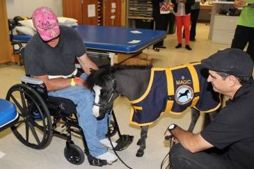 Crédit photo : Association Gentle Carousel Miniature Therapy Horses