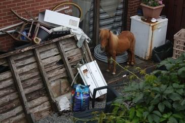 """Un riverain a pris en photo un poney """"stocké"""" parmi les débris (Crédit : Guy Belang sur Facebook)"""