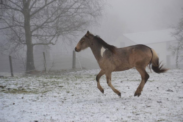 Lorsqu'il a froid, le cheval peut soit se mettre en mouvement, soit s'économiser. (Crédit : Alexia Waterman)