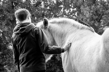Malgré nos différences, les chevaux communiquent très bien avec nous (Crédit : Camille Mennechet)