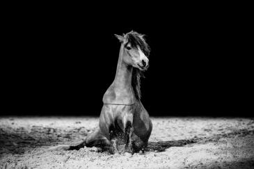 Le poney de Cathy Mittig, l'une des artistes interviewée dans L'équimag de décembre 2017 (Crédit photo : Antoine Bassaler)