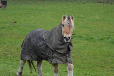 L'arthrose touche un quart des chevaux. (Crédit : G. Colinet)