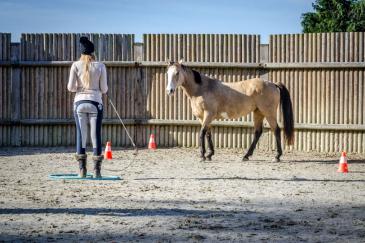L'Equifeel permet un réel dialogue entre le cavalier et son cheval. (Crédit photo : Valentine Van den Eynde)