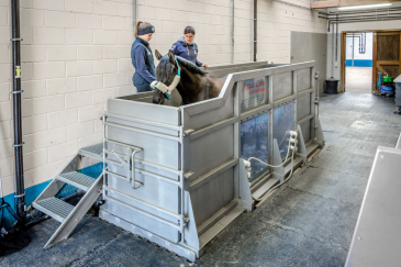 Une préparation de deux semaines est prévue afin d'habituer les chevaux à entrer dans l'exigu aquatrainer. (Crédit photo : Valentine Van den Eynde)