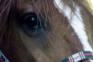 Animal imprévisible, le cheval a parfois des réactions impressionnantes (Crédit : Gaëlle Colinet)