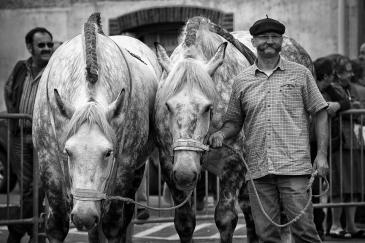 Les chevaux de trait séduisent pour leur côté écologique. (Crédit : CC0 Creative Commons)