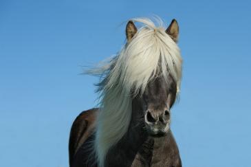 La durée de vie des chevaux est plus intéressante que celle des chiens. (Crédit : CC0 Creative Commons)