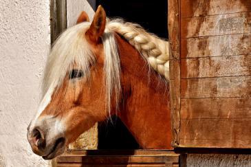 Avez-vous tous les produits nécessaires pour votre cheval? (Crédit : Pixabay License)