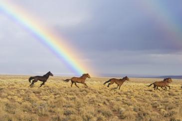 Les chevaux sauvages seraient trop nombreux sur le territoire américain. (Crédit : Pixabay License)