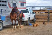 La vue du cheval peut compliquer l'embarquement dans le van (Crédit : Pixabay License)
