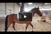 Embedded thumbnail for Stage exceptionnel pour cavaliers scolaires et juniors