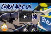 Embedded thumbnail for Des motards au secours de deux chevaux